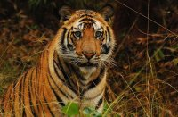 The Wildlife Tour of India