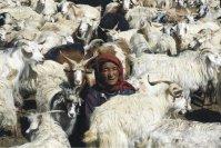 Safari through Ladakh
